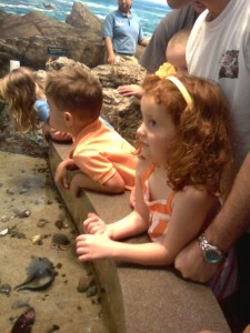 Learning About Horseshoe Crabs