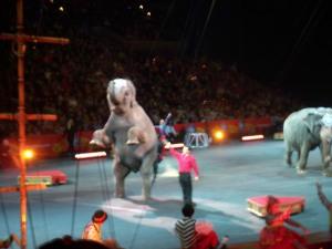 Elephants are cool too